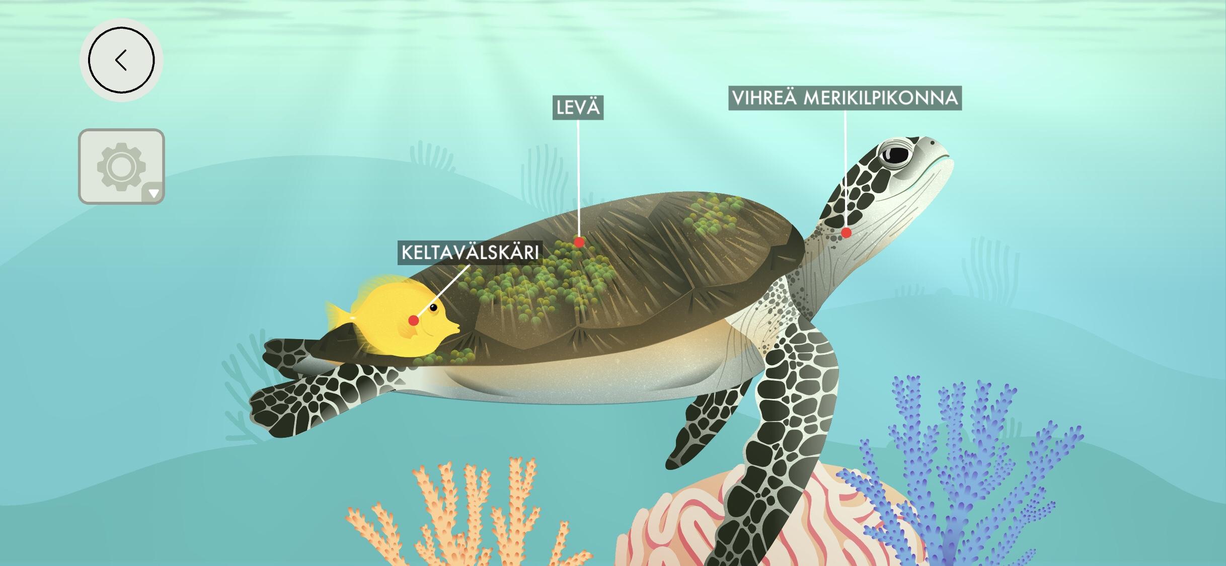 Tinybopin koralliriutta